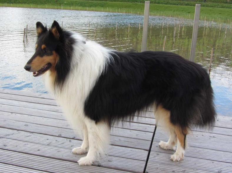 brosser-mon-chien-1