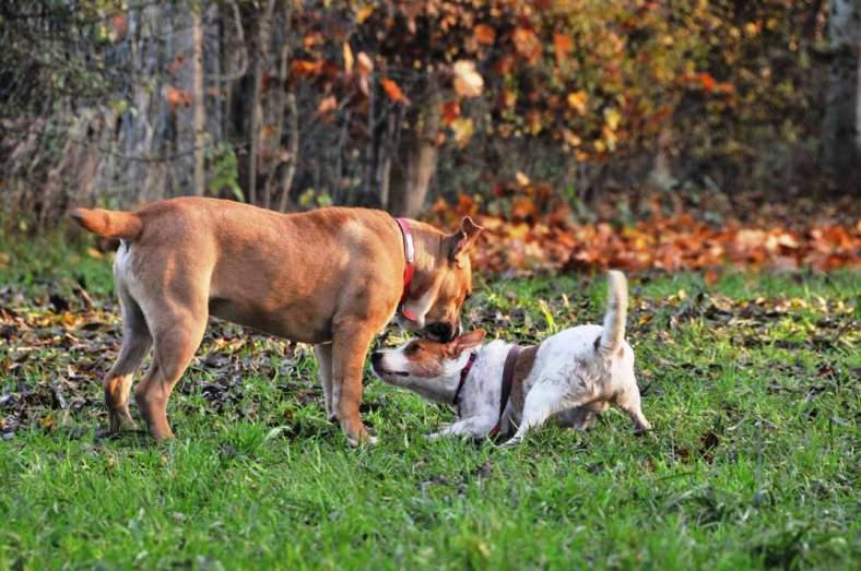chien-menace