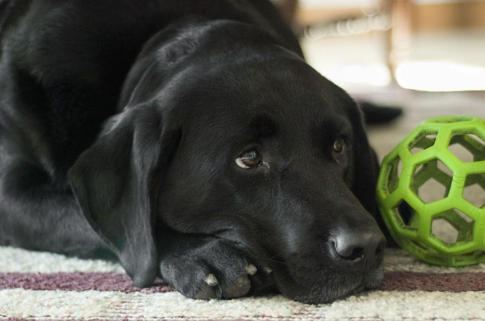 dog-862941_1920
