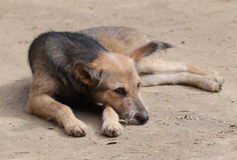 le-chien-vieillissant