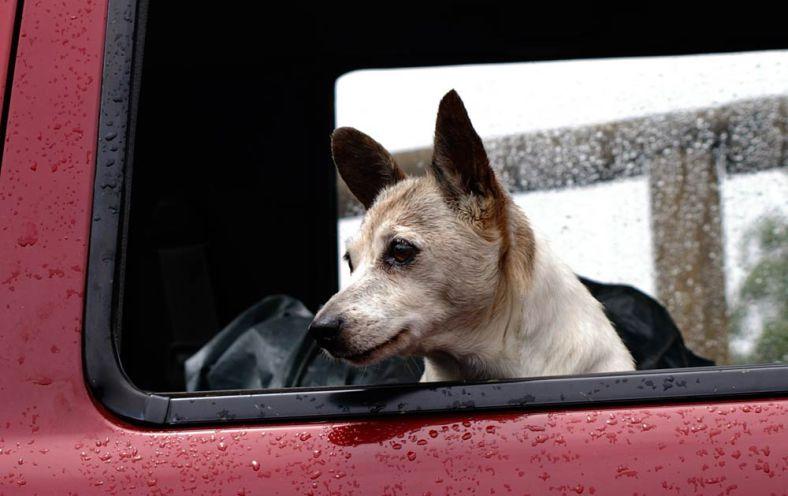 mon-chien-a-peur-en-voiture