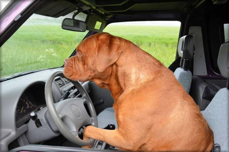 transport-chien-blog-1