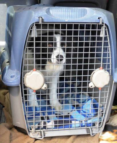 transport-chien-blog-2