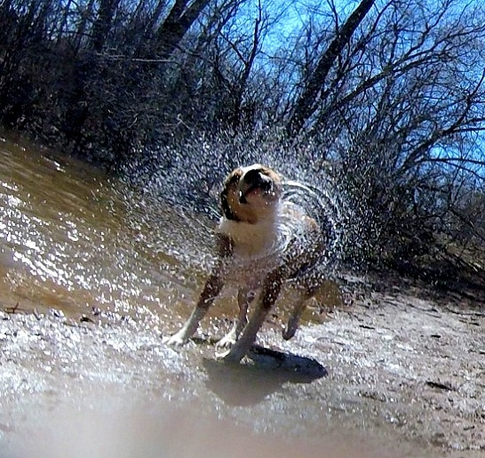 chien photographe