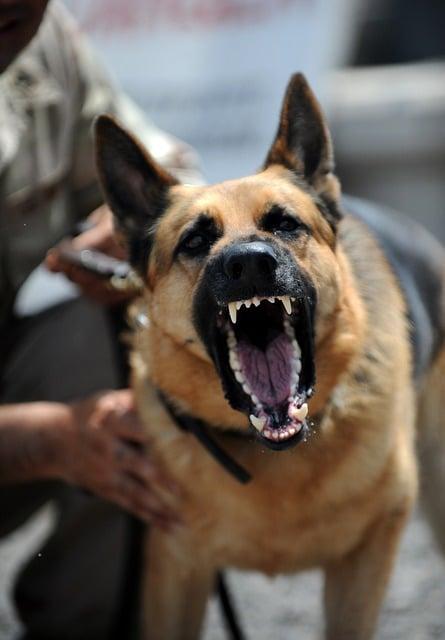 l'agressivité des chiens