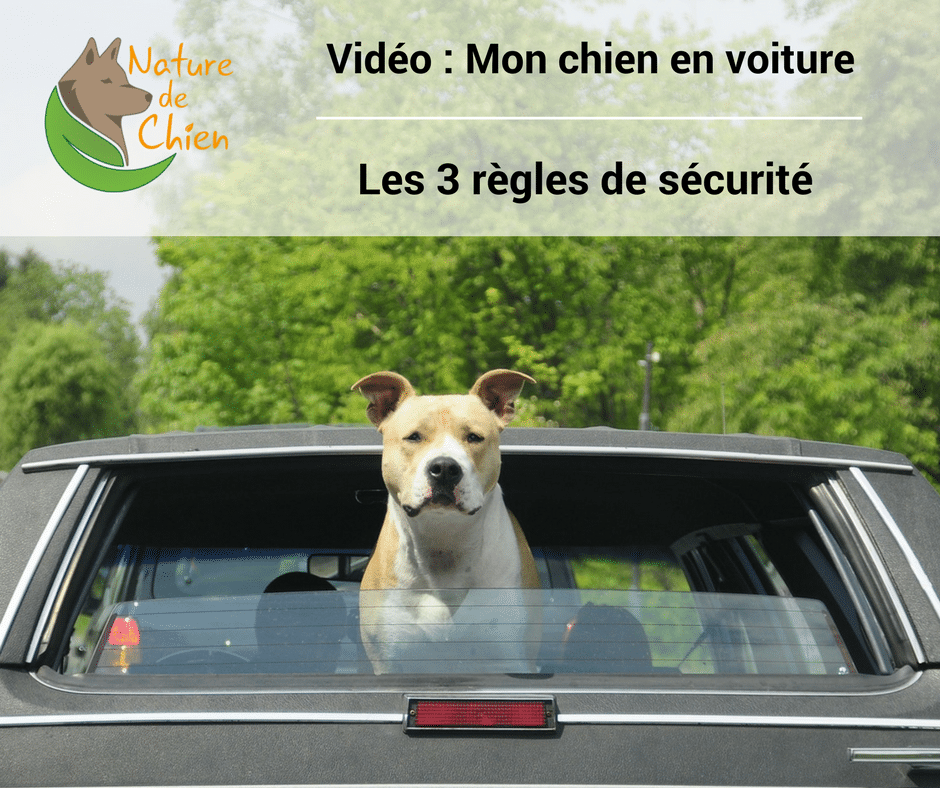 mon chien en voiture les 3 r gles de s curit s vid o nature de chien. Black Bedroom Furniture Sets. Home Design Ideas