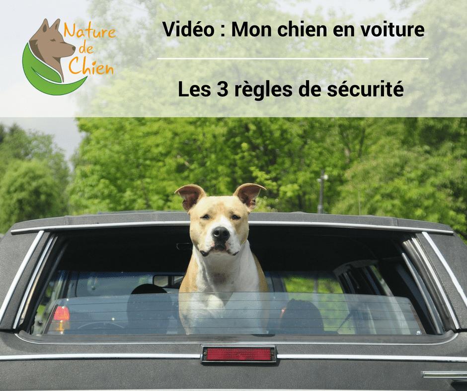 Mon chien en voiture   les 3 règles de sécurités   Vidéo Nature de Chien 3480c1d1af42