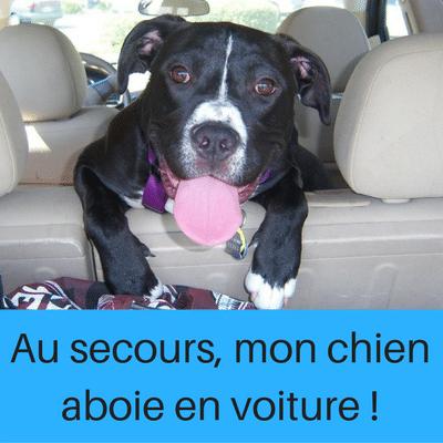Mon chien aboie en voiture nos solutions pour vous aider - Enlever poil de chien voiture ...