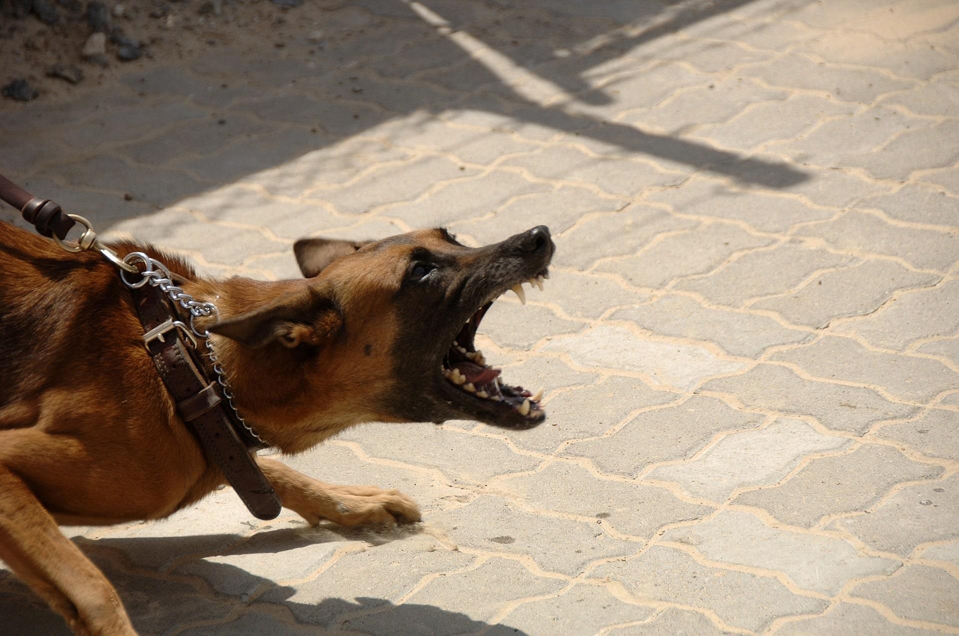 rencontre entre un chien adulte et un chiot femme pour plan q