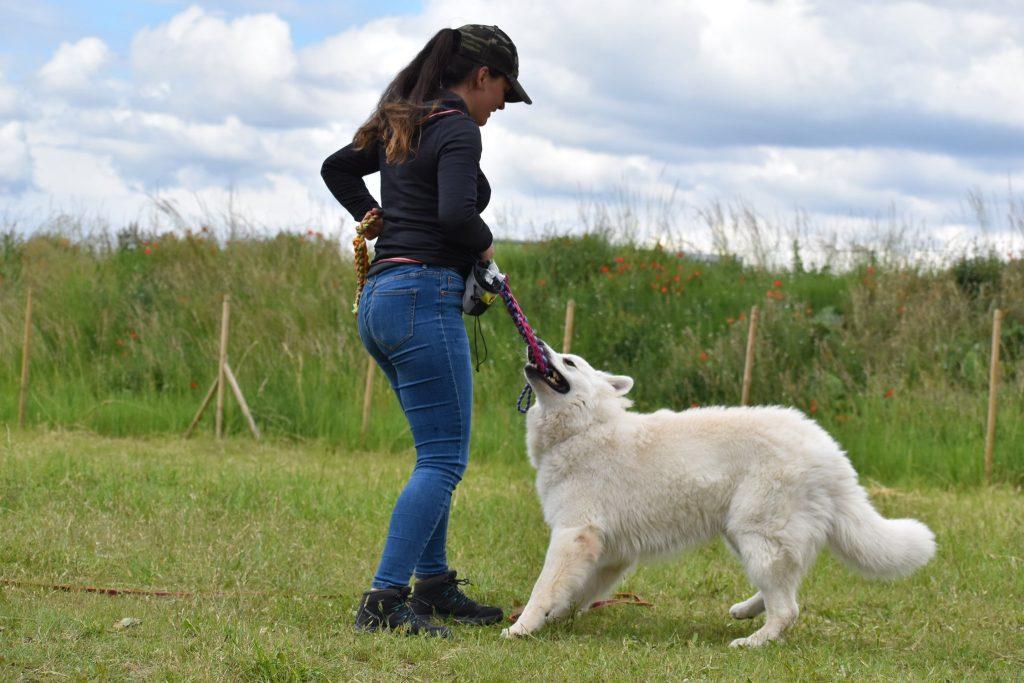 apprendre au chien à donner
