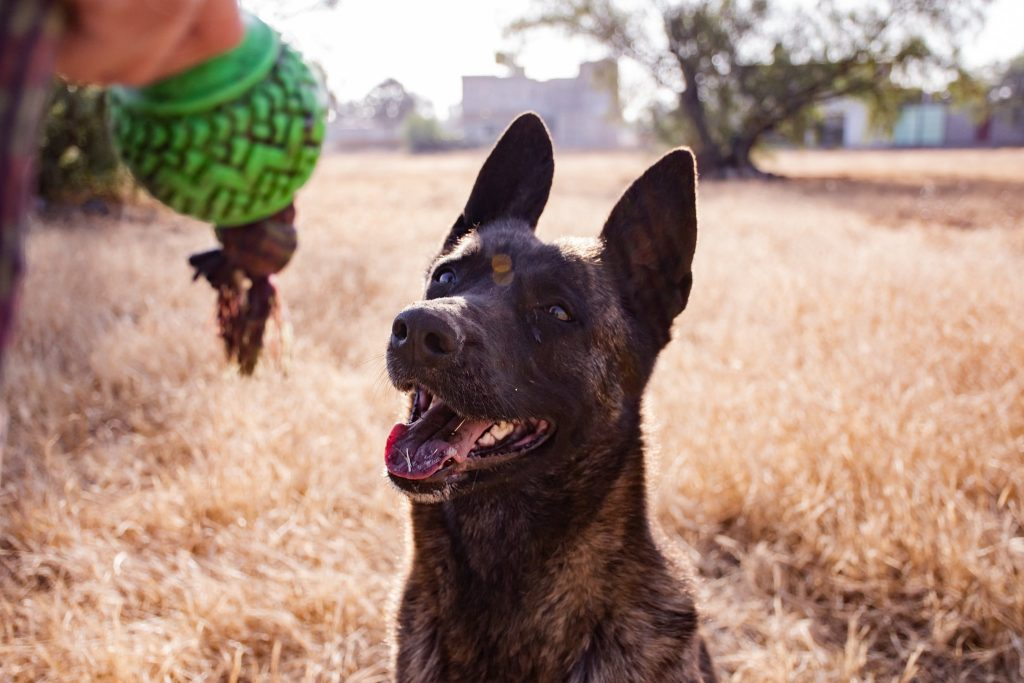 Apprendre à son chien à jouer