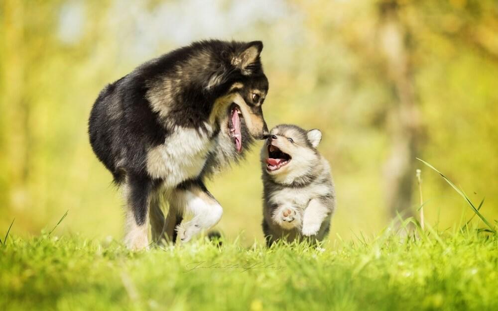 la socialisation chez le chien