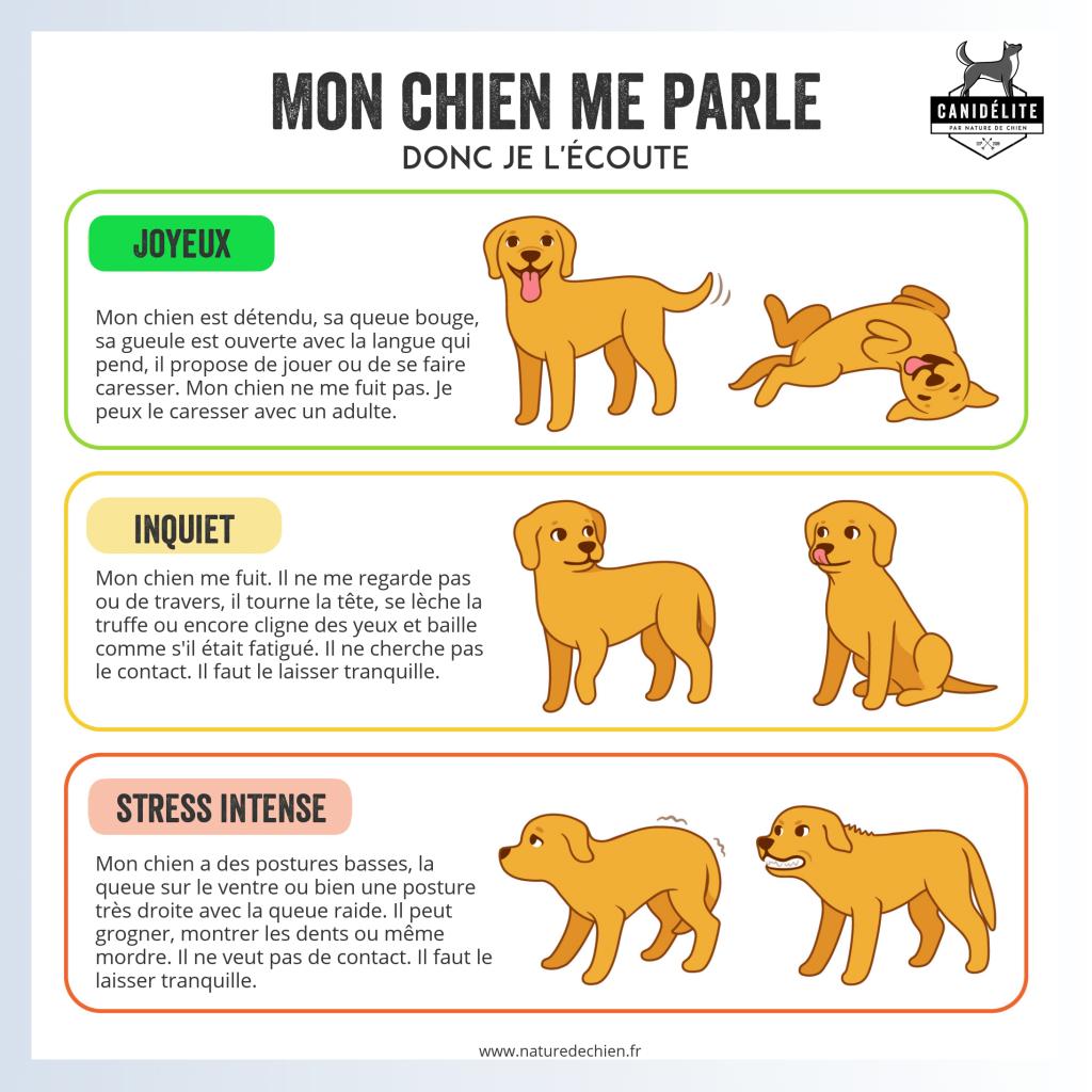 chiens et enfants