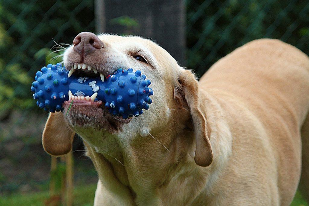 dent chien,problème dentaire chien,mon chien a mal au dent,prendre soin des dents de son chien,maladies dentaires du chien,brosser les dents de son chien,problème de tartre chien,mauvaise haleine chien