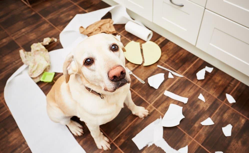 déménagement chien,aider son chien lors du déménagement,nouvelle maison chien,aider son chien,chien et déménagement,quoi faire avant de déménager avec son chien,déménagement chien urine,déménagement chien conseil,déménagement chien aboie,demenagement chien anxieux,demenagement chien qui pleure,déménagement chien déprimé,déménagement chien stressé,demenagement chien et chat,déménagement chien agressif
