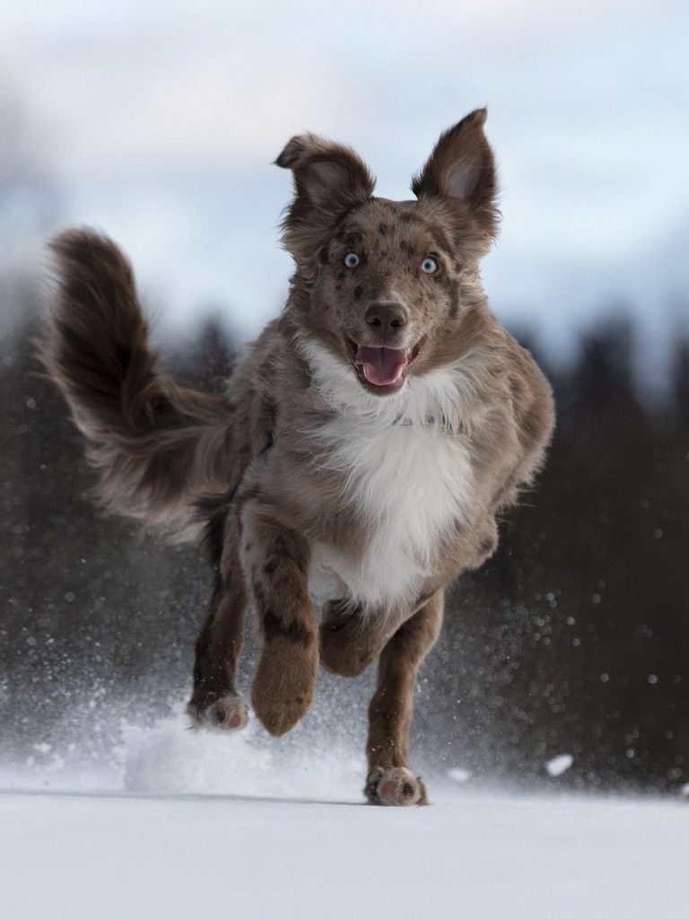 l'éducation de base du chien,bases éducatives chien,chien éduqué,comment éduquer son chien,que dois-je apprendre à mon chien
