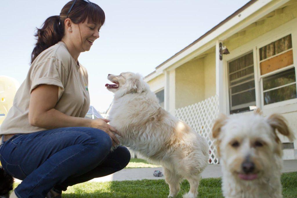 anxiété de séparation,chien seul à la maison,laisser son chien seul,mon chien détruit en mon absence,destruction chez le chien,chien et problème de voisinage,laisser son chien dans la maison,mon chien panique quand il est seul