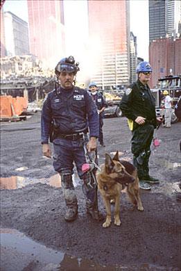 chiens héros,chiens héros c8,chien héros de guerre,chien héros film,chien héros histoire,chiens hero,chiens heros c8 replay,chien héros dessin animé,chien héros de bande dessinée,chiens heros joy,chien extraordinaire,chien du RAID,chien sauveteur,chien de recherhce,chien guide,labrador,terre neuve,berger allemand,chien soldat