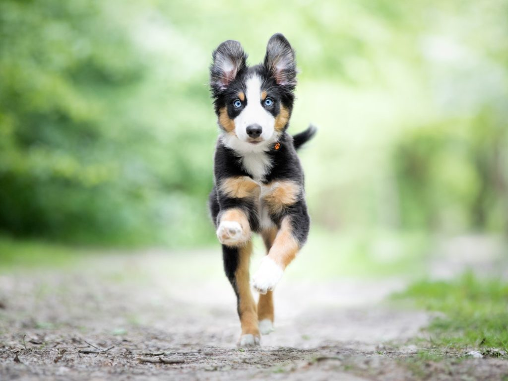 dog rights ms outdoors active puppy running white black gold dog @ilaanddrax 1
